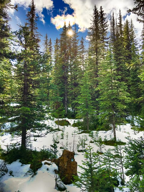 Snow Forest at Peyto Lake - Alberta Canada