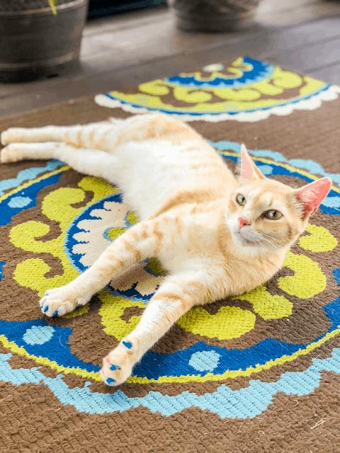 Nacho Man Kitty Savage - instagram/nachomankittysavage