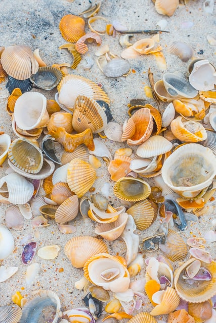 The shells on the Atlantic Ocean beaches are my FAVORITE!