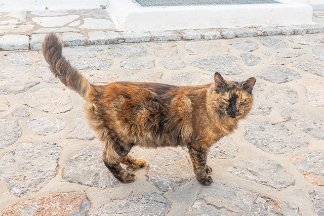 Cats of Greece - cats are commonplace in Greece. They are well taken care of by the community and very friendly. You can even pet them if you wish! Here are some of the cats we found in Poros, Epidavros, Náfplio, and Hydra. #cats #travel #greece #europe
