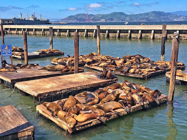 Sea Lions at Fishermans Warf - San Francisco, CA