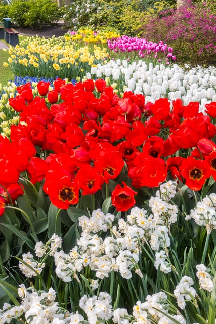 Keukenhof Gardens - Tulip Heaven in the Netherlands - a MUST if you are in Europe in the spring. The most amazing garden EVER!