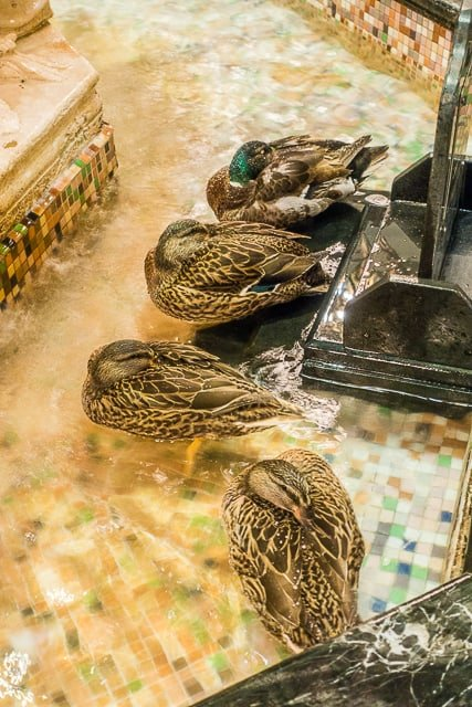 The Duck March at The Peabody Hotel - Memphis, TN