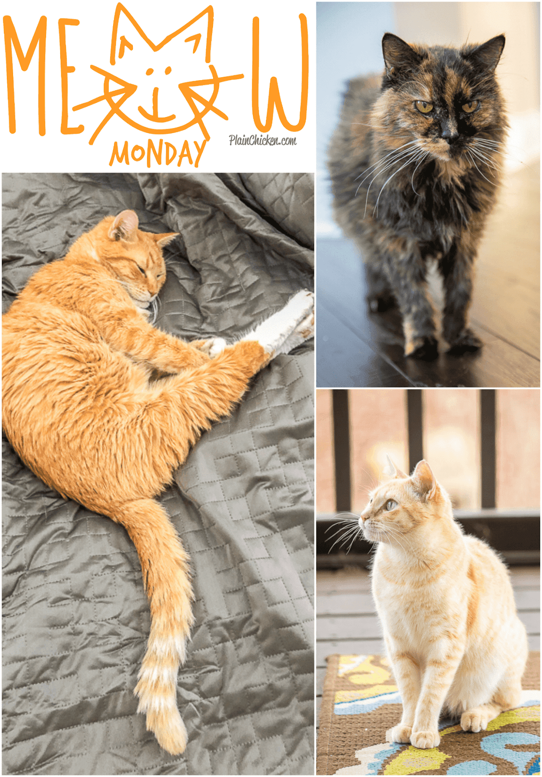 Meow Monday - cute cat pictures to start off your week! It's the best thing about Monday!! Come see what Jack, Squeaky and Nacho Man Kitty Savage have been up to!