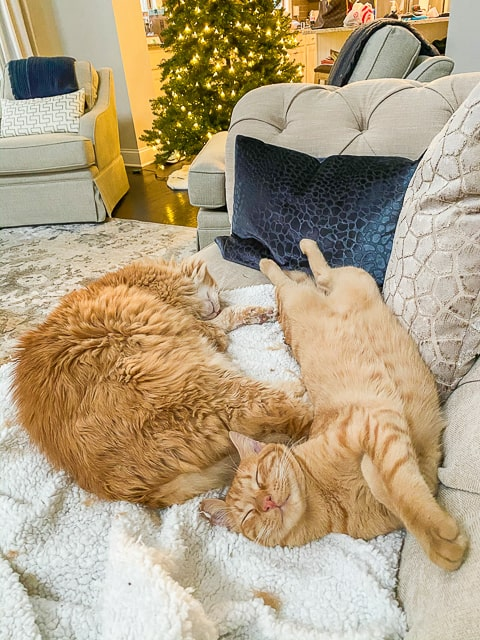 picture of two cats sleeping