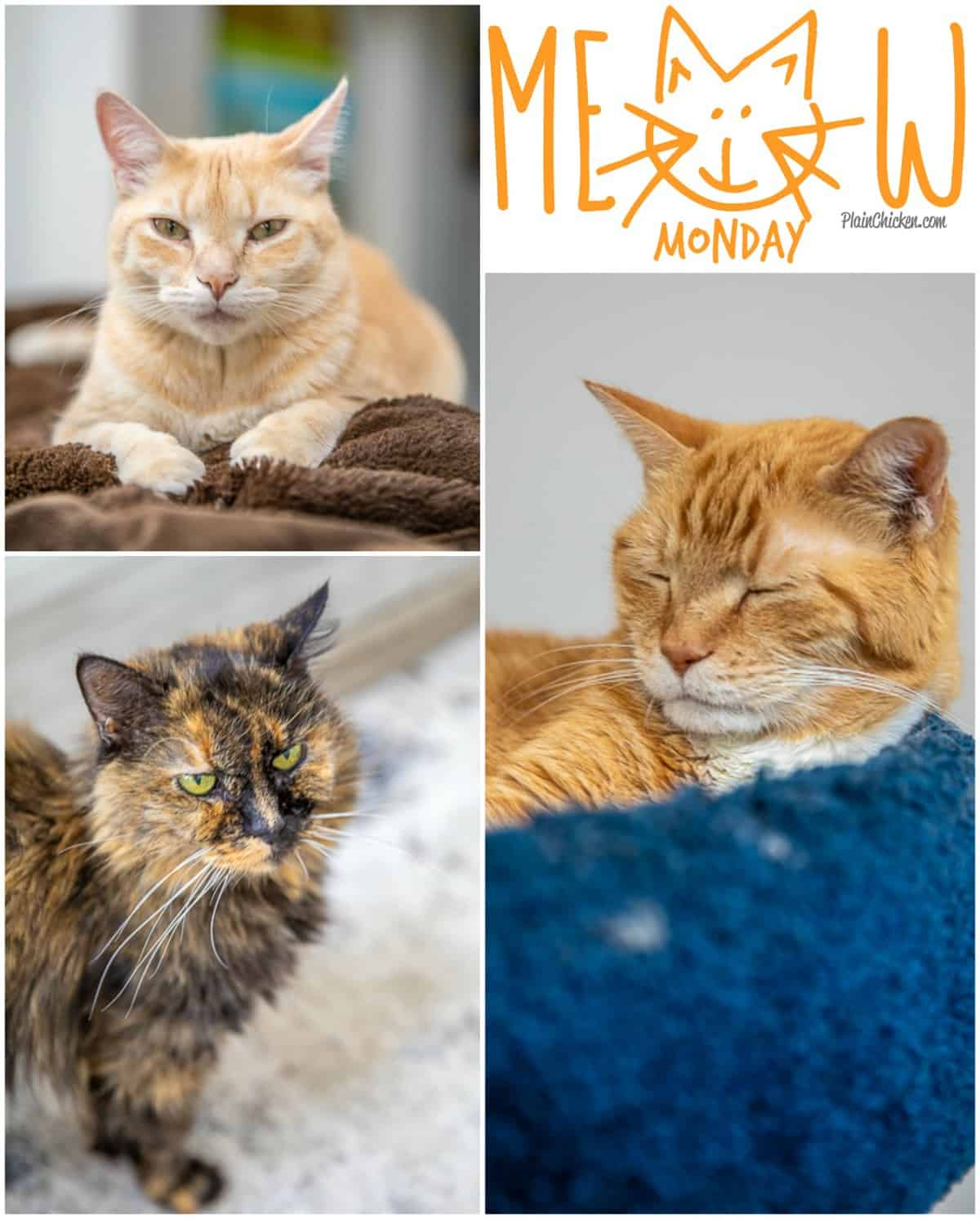 Meow Monday - pictures of cute cats to start your week! Come see what Jack, Squeaky and Nacho Man Kitty Savage have been up to this week! #cats
