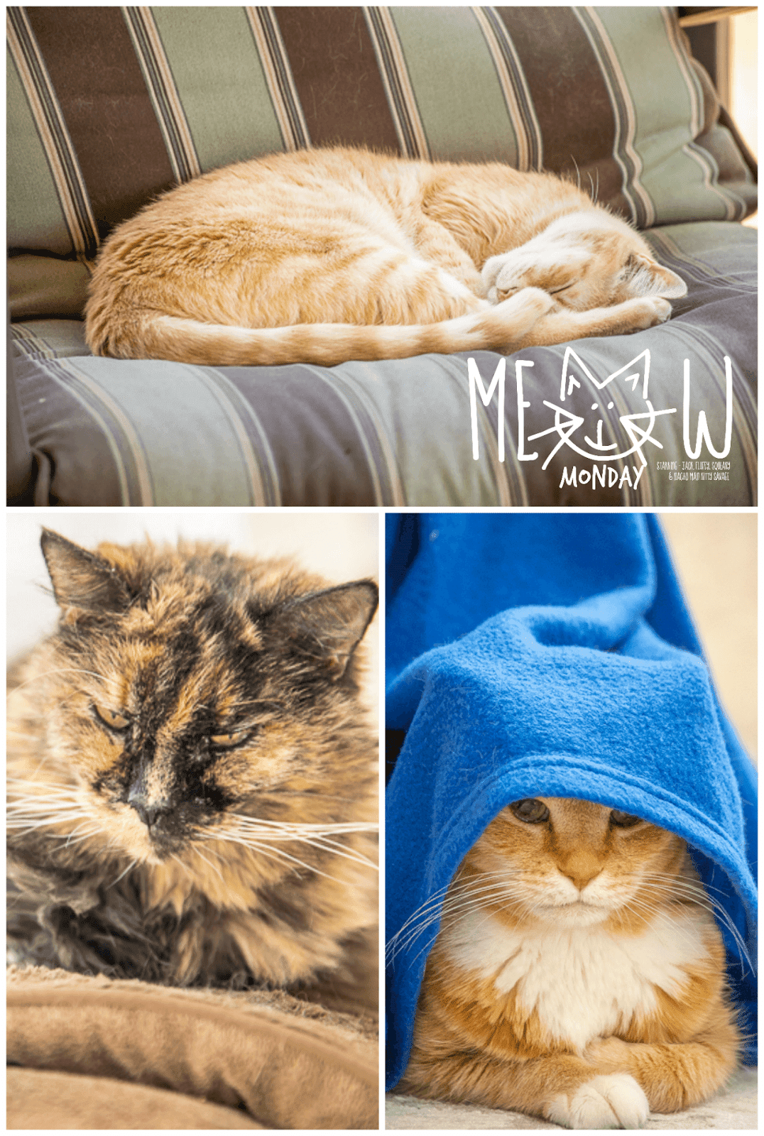 pictures of 3 cats