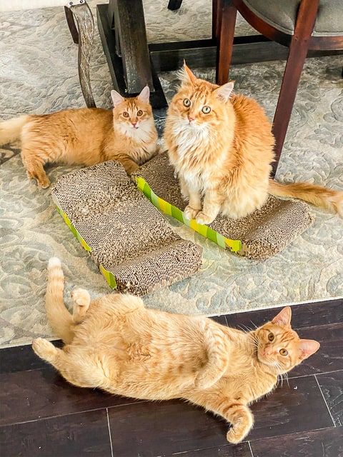 3 cats sitting on the floor