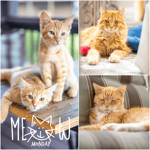 collage of cat photos
