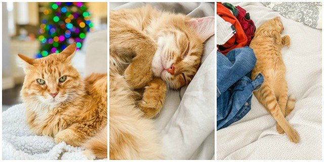 collage of 3 cat photos