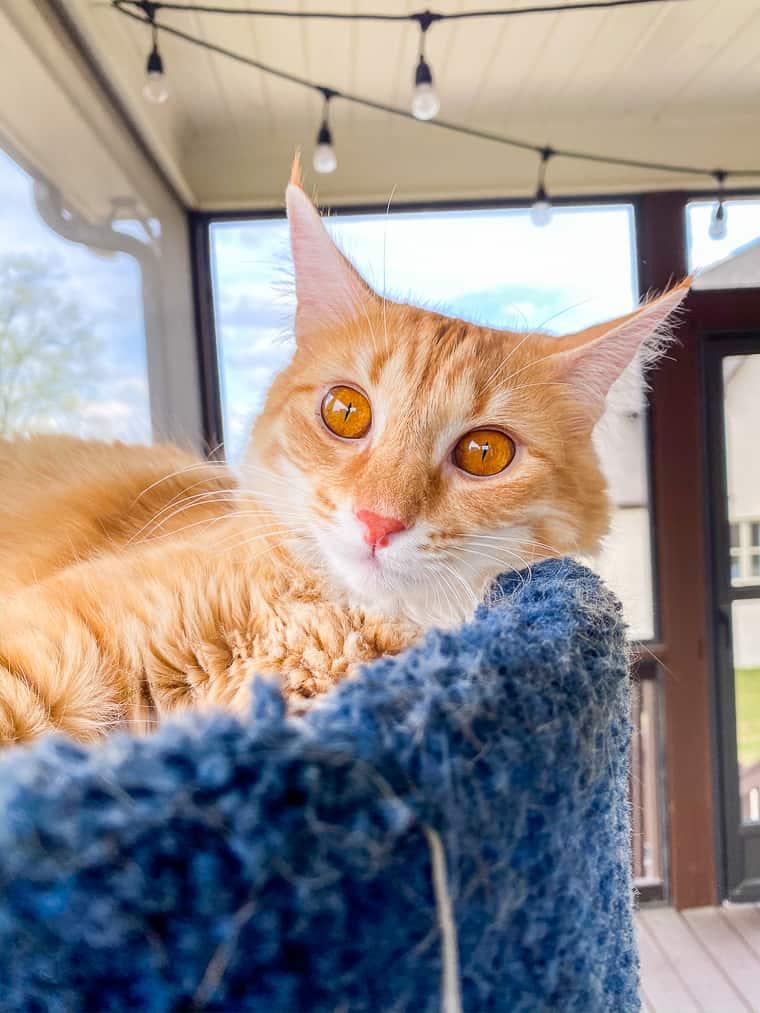mango meow monday