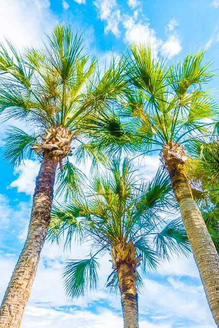 Golf Villa at Sawgrass Marriott Golf Resort and Spa in Ponte Vedra, FL