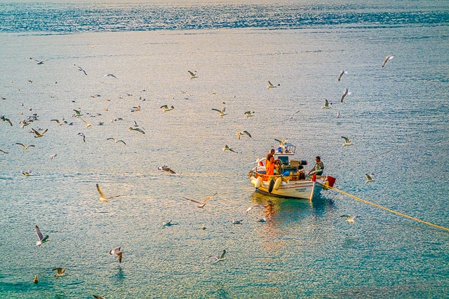 Seagulls and Fishermen New Ageli Resort and Hotel Poros Greece