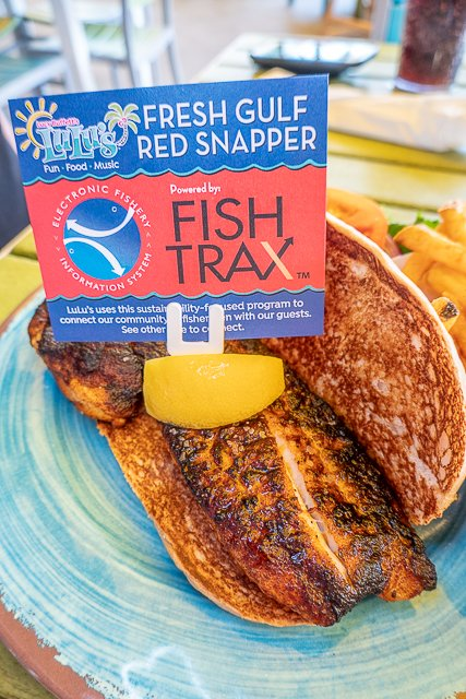 red snapper sandwich