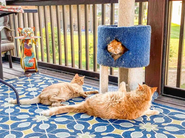 3 orange cats at a cat tower