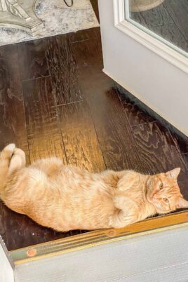 orange cat laying on floor