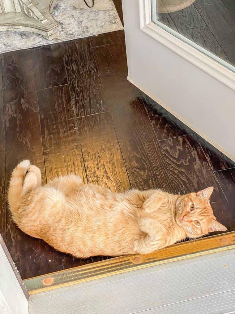 orange cat laying on floor