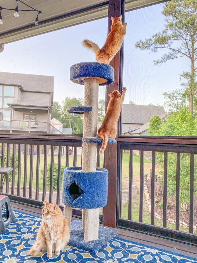 3 orange cats sitting on the cat tower