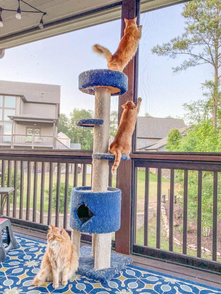 3 orange Katzen sitzen auf dem Katzenturm