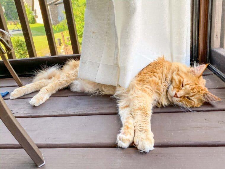 orange cat sleeping in curtains