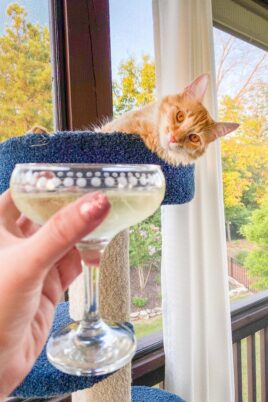cat and wine glass