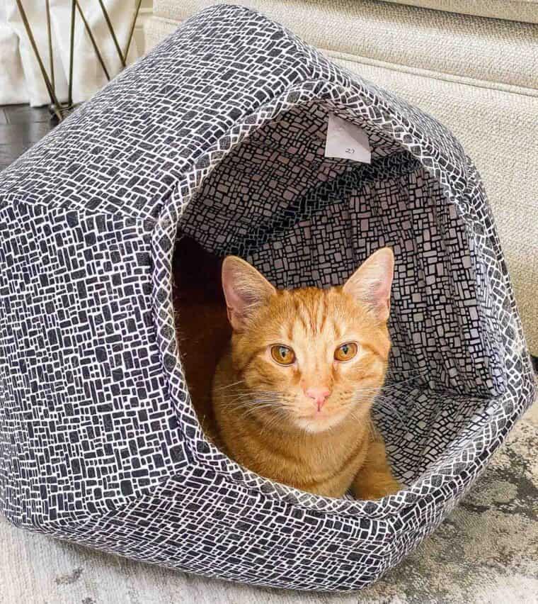 orange cat in a cat ball bed