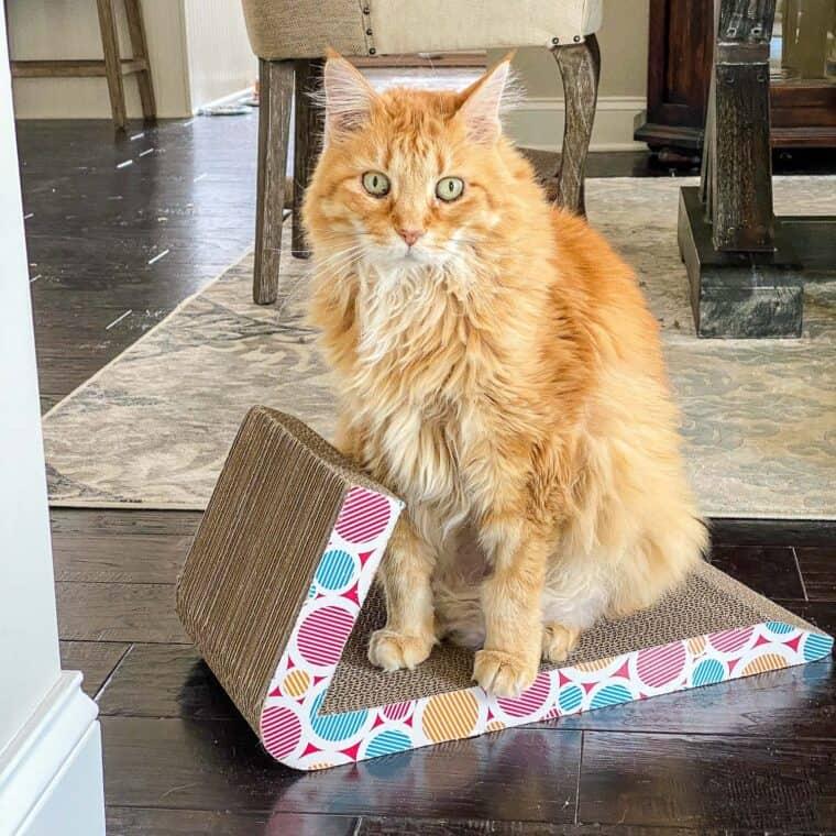 orange cat sitting on scratcher