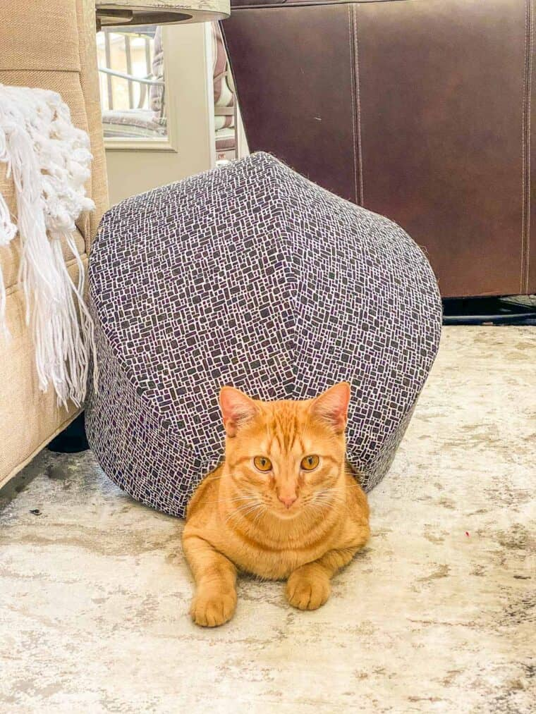 orange cat in a cat bed