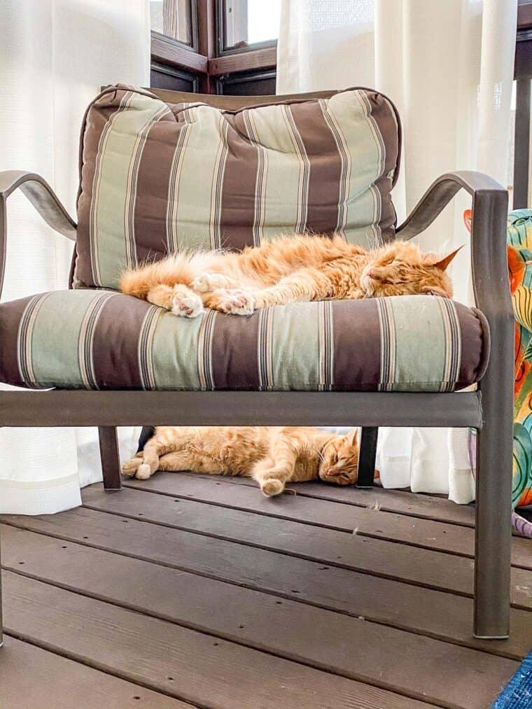 two orange cats sleeping outside