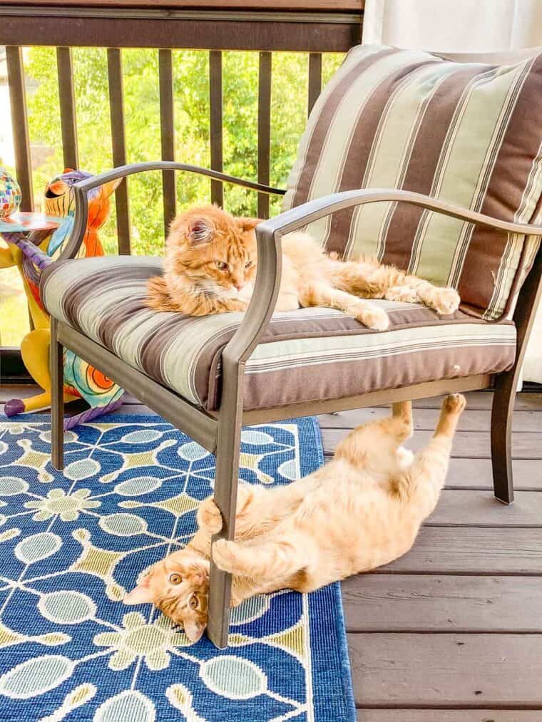 two orange cats in a chair