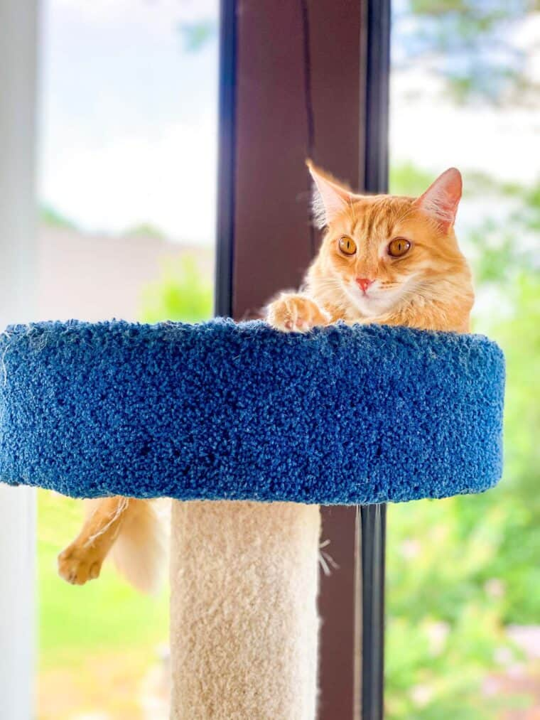 orange cat sitting outside in cat tower