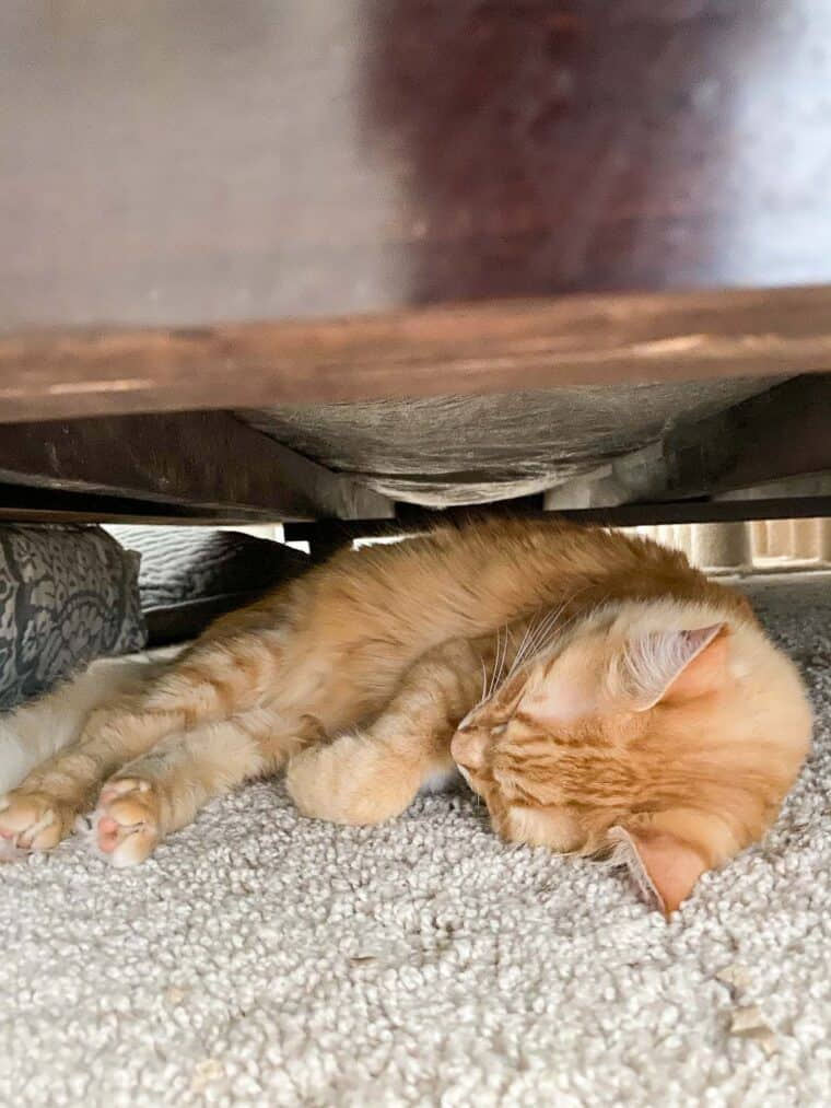 orange cat sleeping under the bed