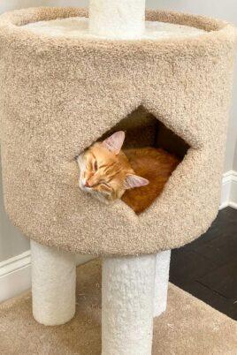 orange cat sleeping in cat tower