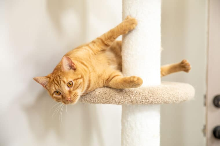 orange cat on cat tower