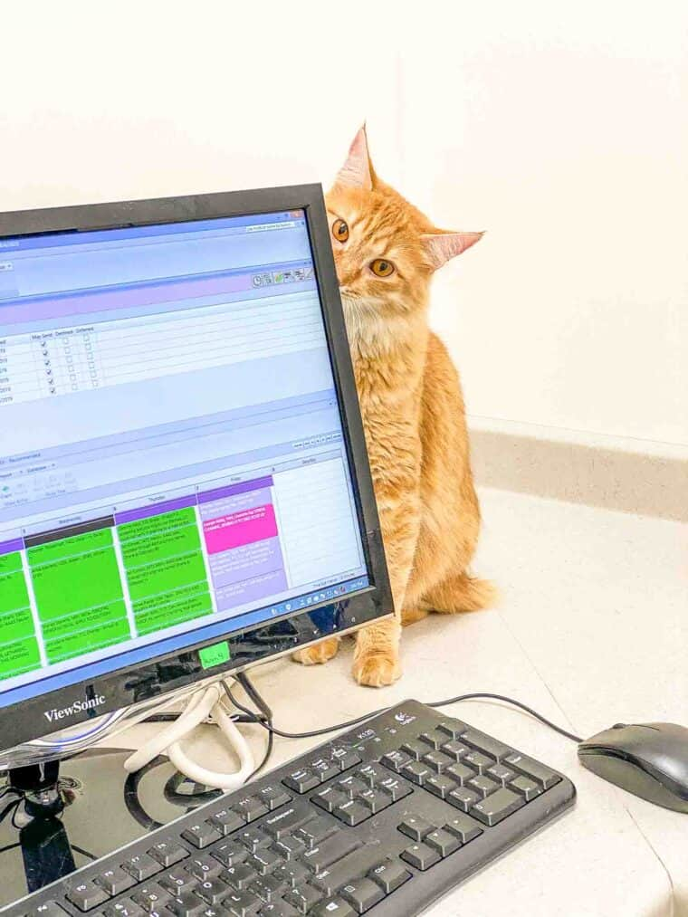 orange cat by computer