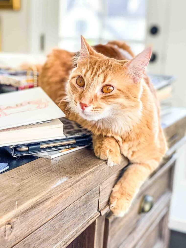 orange cat sitting on a desk