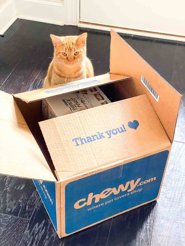 orange cat with chewy box