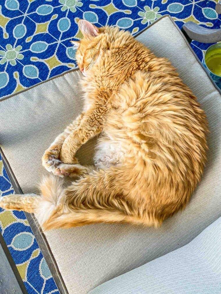 orange cat sleeping in chair