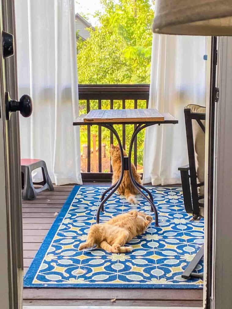 orange cats sitting outside