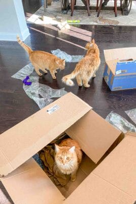3 orange cats with boxes