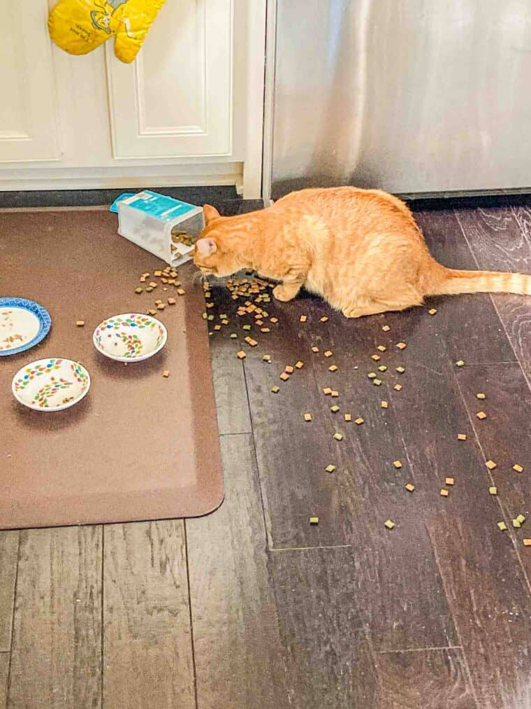 orange cat eating food off the floor