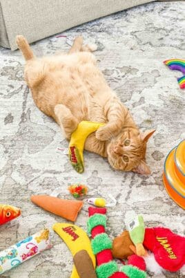 orange cat on his back playing with toys