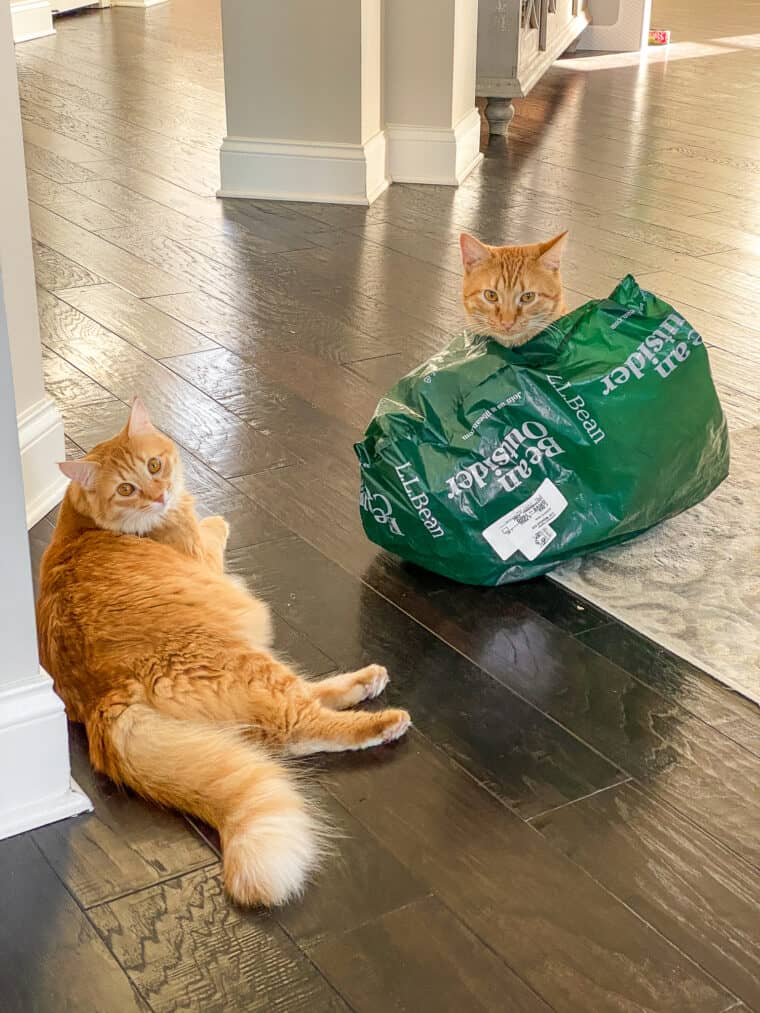 orange cats on the floor one in a green bag