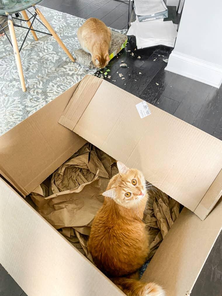 one orange cat in a box and an orange cat on a scratcher