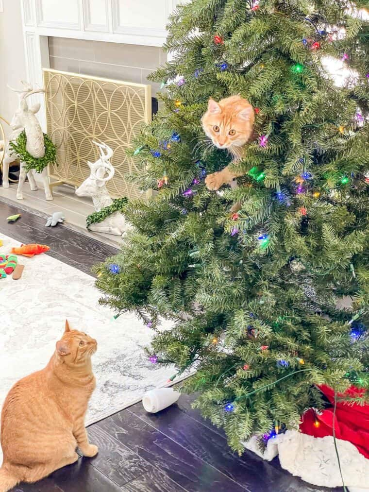 orange cat in a christmas tree with another cat looking up