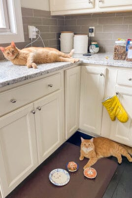 orange cat on the counter and one orange cat on the floor
