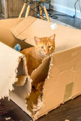 orange cat sitting in a box