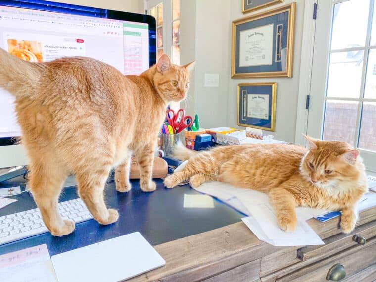 2 orange cats sitting on a desk