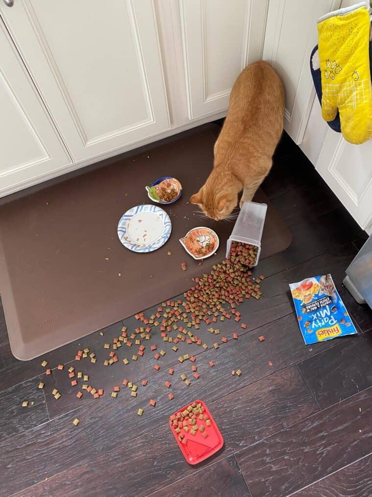 orange cat eating treats off the floor