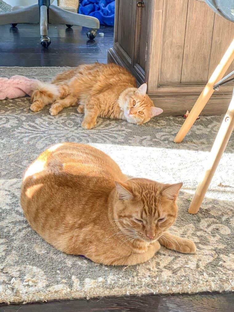 2 orange cats laying on the floor